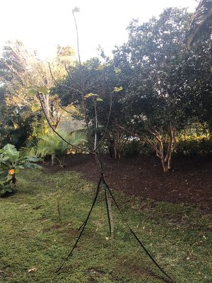 Free fig tree for Sale in FL, US