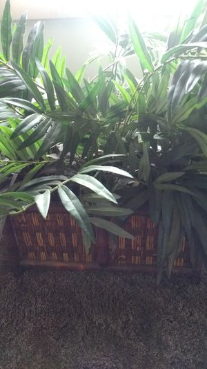 House plant for Sale in Peoria, IL