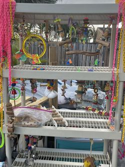 Bird Toys for Sale in Fort Lauderdale,  FL