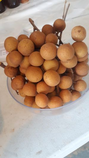 Longan for Sale in Deltona, FL