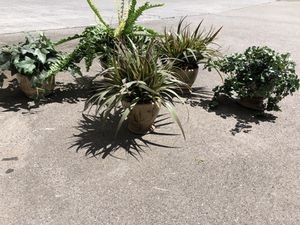 5 fake plants for Sale in Johns Creek, GA
