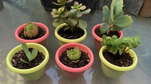 CUTE LITTLE POTS WITH COOL SUCCULENTS! for Sale in Costa Mesa, CA