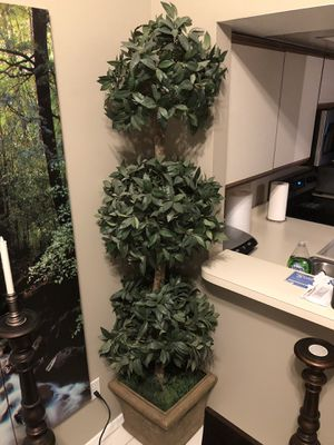 Sweet Bay 3 ball topiary tree for Sale in Kissimmee, FL