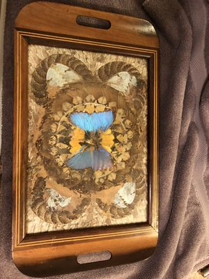 Antique butterfly and moth wings glass framed tray for Sale in Winston-Salem, NC