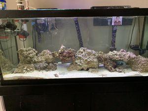75 gallon saltwater fish tank for Sale in Glen Allen, VA