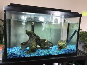 Fish tank with fish 3 fish everything included . for Sale in Chicago, IL