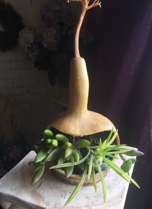 Succulent In Natural Bottle Gourd for Sale in Kissimmee, FL