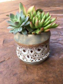 Super Cute Pot w Succulent Plants / Gift / Decor / Patio / Office for Sale in San Marcos, CA