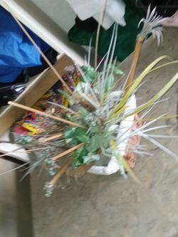 Plant Fake for Sale in Lake Worth,  FL