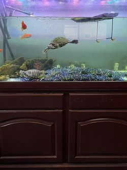 90 Gallon Aquarium for Sale in Chandler,  AZ