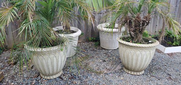 4 Plastic pots 2 f tall with plants