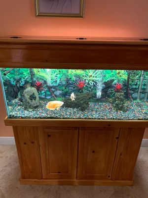 75 gallons for Sale in Hialeah, FL