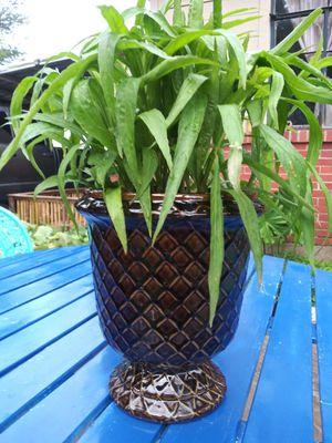 Ceramic vase for Sale in Dallas, TX