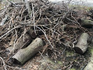 Free Firewood for Sale in Parma, OH