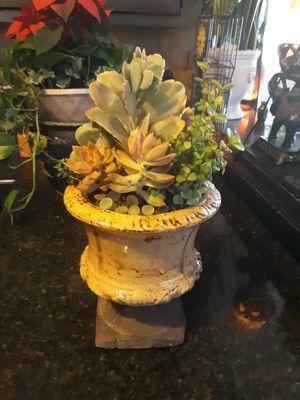 Gorgeous ceramic pot with Beautiful live succulent arrangement for Sale in Chandler, AZ