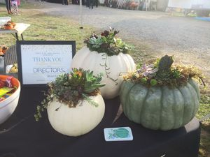 Succulent topped pumpkins for Sale in Tacoma, WA