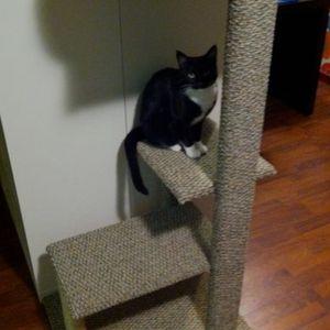 Cat Tower for Sale in Cerritos, CA