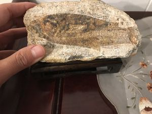 Fish fossil for Sale in Claremont, CA