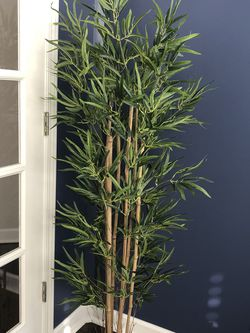 Bamboo Tree - 5.5 Ft Tall - Brand New for Sale in Rolling Meadows,  IL