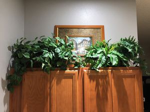 Fake Plants for Sale in Kissimmee, FL