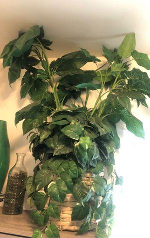 Fake plant for Sale in Burbank, CA