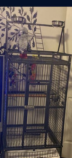 Bird Cage for Sale in Downey,  CA