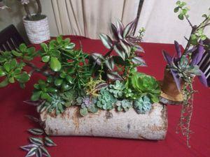 Succulents en bello tronco grande for Sale in Bell, CA
