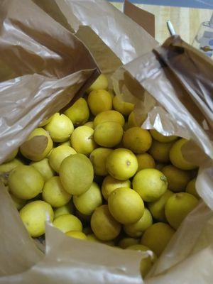 Lemons for Sale in Ontario, CA