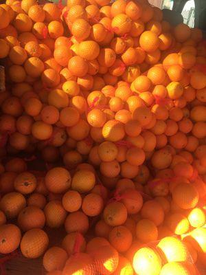 Fresh juicy navel oranges (100for30$) for Sale in El Cerrito, CA