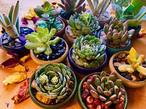 "Succulent crystal arrangement ~ healing pots ~ miniature 2.5"" pot for Sale in Oakland, CA"