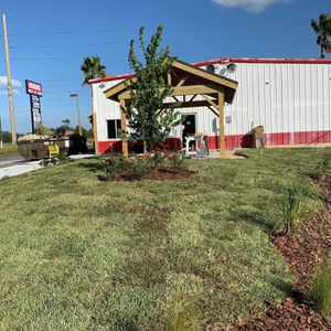 Sod plants for Sale in New Port Richey, FL