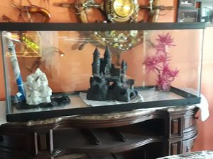 55 gal Aquarium for Sale in LA, US