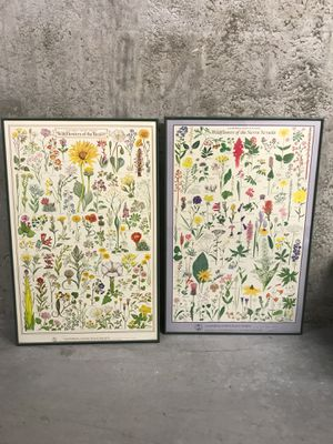 Vintage Framed Wildflower Posters for Sale in Seattle, WA