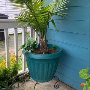 Outside Plant (plastic pot) for Sale in Houston, TX