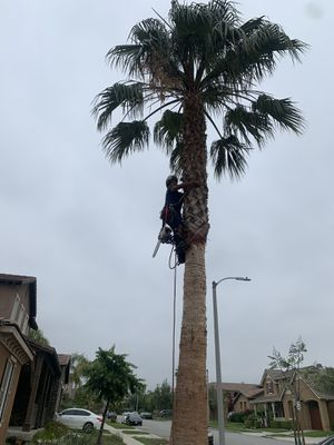 All phases of tree care. we do it all any type of job for Sale in South Pasadena, CA