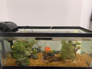 20 gallon fish tank with everything in it with fish for Sale in Dawsonville, GA