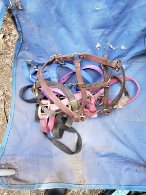 5 colt halters for Sale in Irrigon, OR