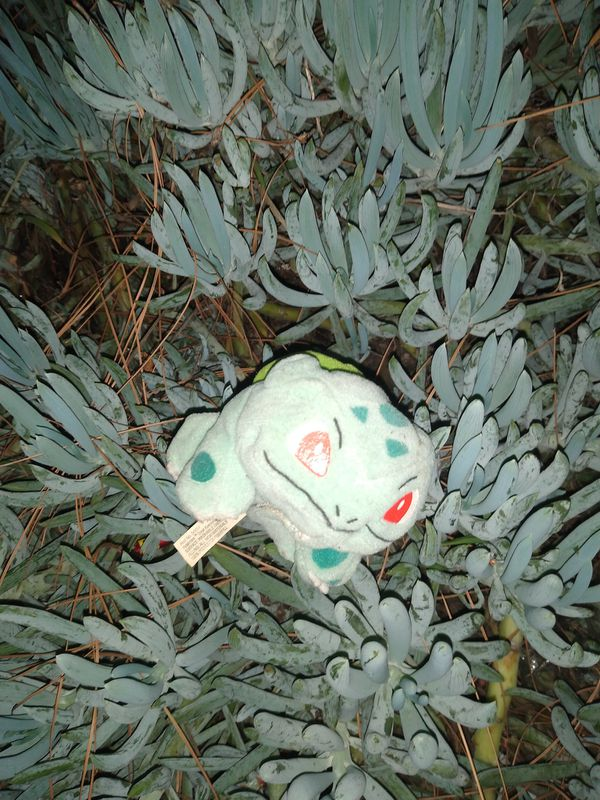 Rare Nintendo Bulbasaur and Squirtle