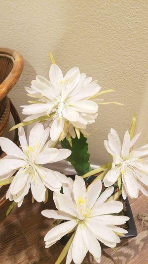Beautiful silk plant fake for Sale in Las Vegas, NV