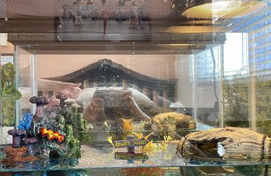 Fish Tank With All Contents for Sale in Tampa,  FL