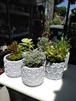 SUN & SHADE PLANTS for Sale in Paramount, CA