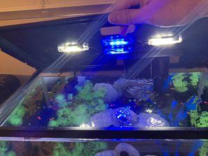 20 Gallon Aquarium. for Sale in San Bernardino, CA
