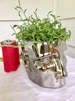 Real Indoor Houseplant - Fish Hook/ Banana String Succulent Plants in Silver Man Head Ceramic Planter Pot for Sale in Auburn, WA