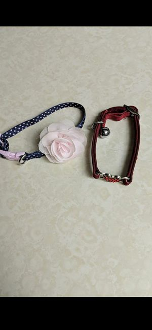 Dog/cat collar for Sale in Pinellas Park, FL