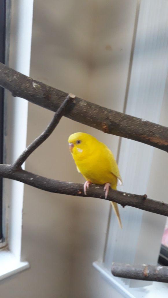 Cage Bird and 4 fancy bird