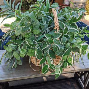 Faux Plant In Woven Basket for Sale in Gilbert, AZ