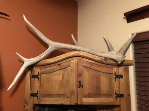 Large 50 inch elk shed. for Sale in Phoenix, AZ