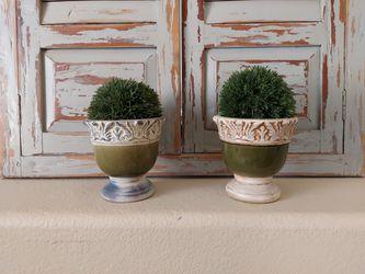 Plants (Topiary ball) for Sale in Phoenix,  AZ