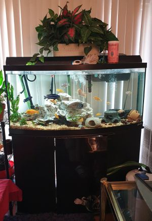 Bow front Fish Tank Aquarium 75 Gal with cichlids new canister filter for Sale in Herndon, VA