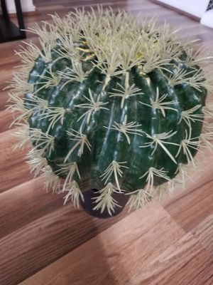 Plant Fake Cactus Round 12 Inches New for Sale in Austin, TX
